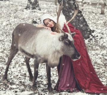 Питомник ездовых северных оленей